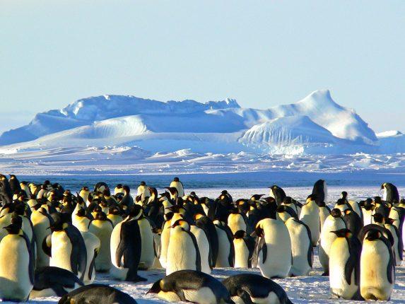 Un voyage en Antarctica