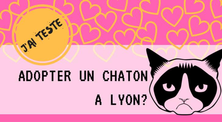 Comment Adopter Un Chat A Lyon Conseils Et Adresses