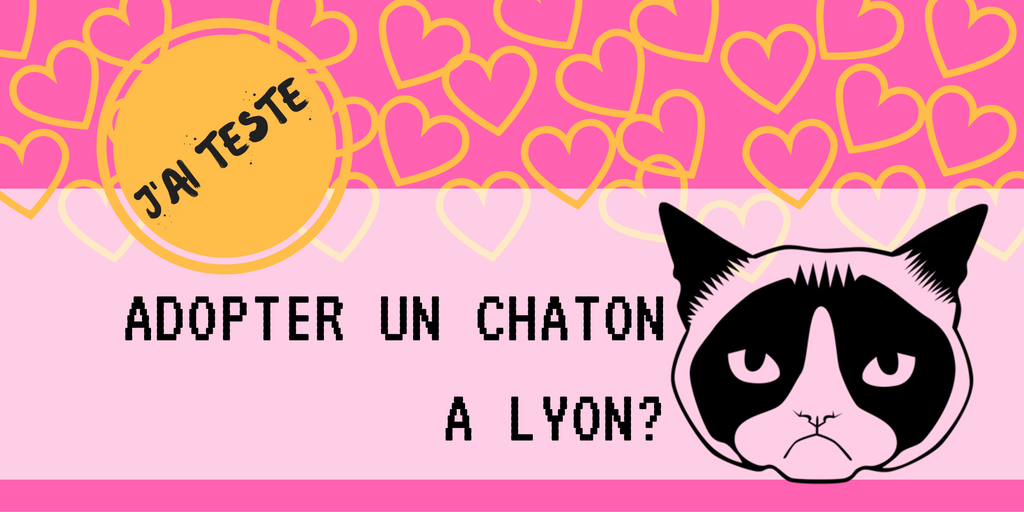 Comment adopter un chat à Lyon ?