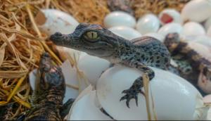vacances_printemps_2019_enfants_ferme_aux_crocodiles